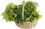 Kořeninová a lahůdková zelenina